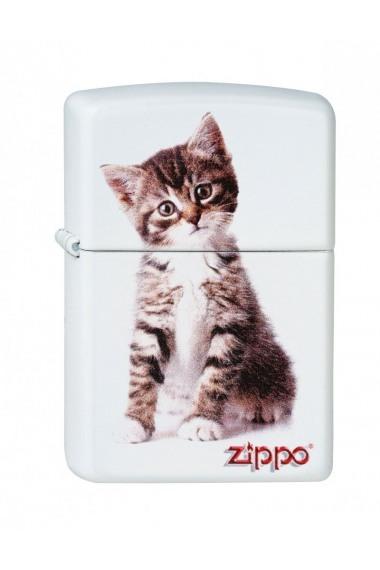 Zippo Kitten Sitting